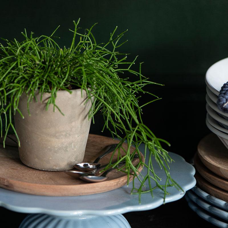 plato de madera de acacia